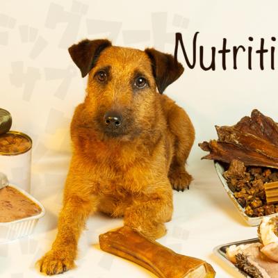 犬に必要な栄養素