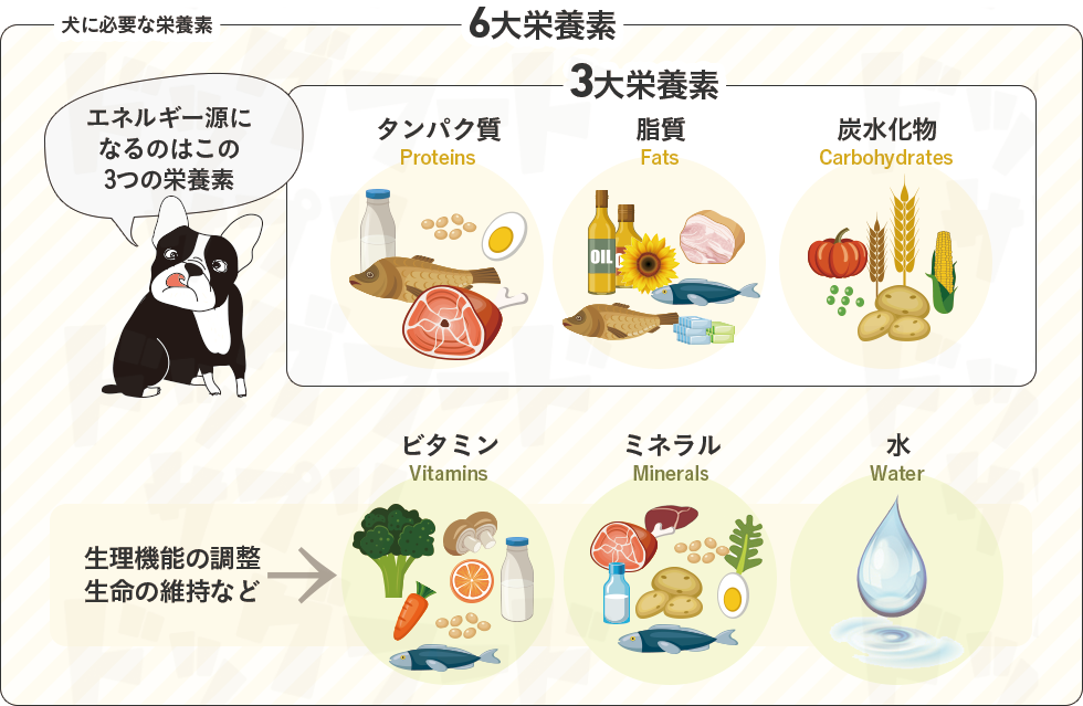 犬に必要な6つの栄養素と食品