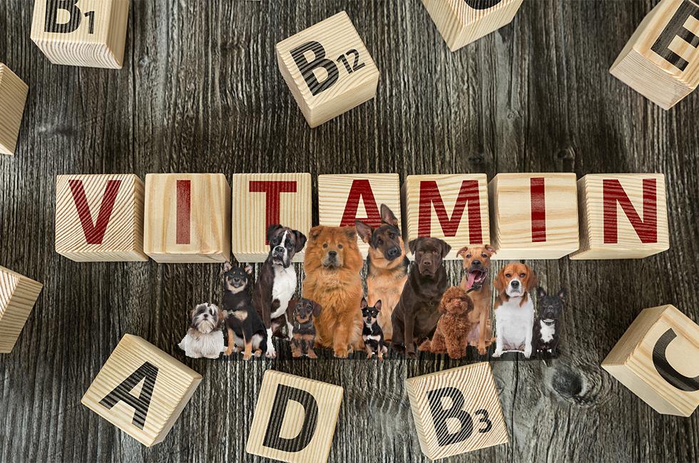 犬とビタミン