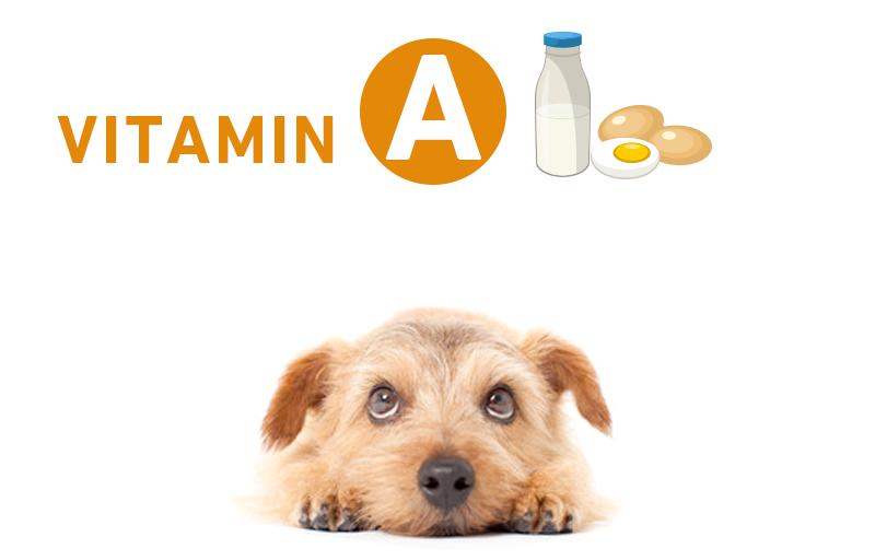 犬とビタミンA(レチノール)