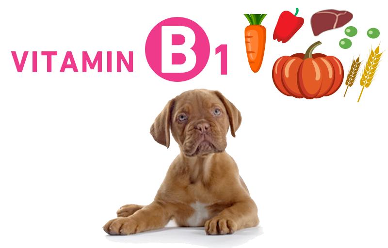 犬とビタミンB1(チアミン・アノイリン)