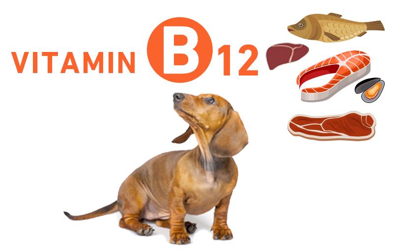 ビタミンB12(コバラミン・シアノコバラミン)