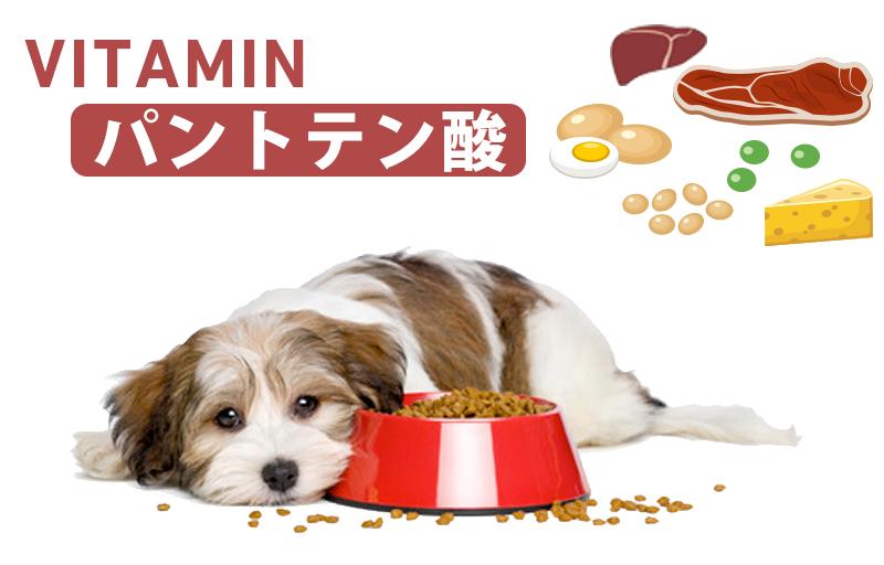 犬とパントテン酸(ビタミンB5)
