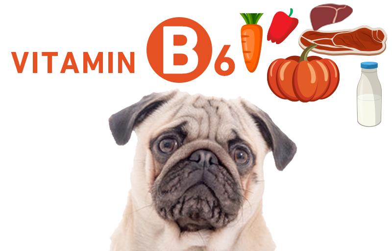 犬とビタミンB6(ピリドキシン・ピリドキサール・ピリドキサミン)
