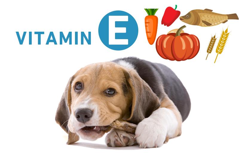犬とビタミンE(トコフェロール)