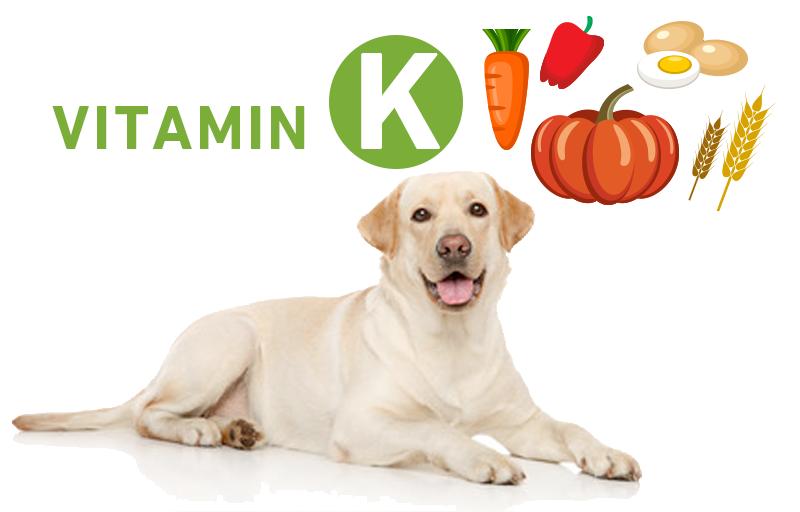 犬とビタミンK(フィロキノン)